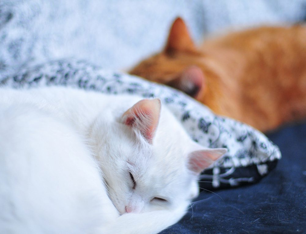 Understanding Your Cats Sleeping Pattern